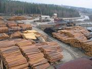 Предлагает к продаже лес - кругляк из России регионов Сибири^