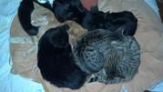 Отдам кошек в связи с переездом