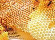 Мед,  пчелопакеты,  яд
